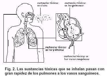toxicos - fig2