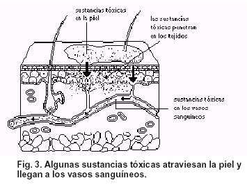 toxicos - fig3